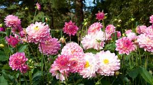 DGA wil zakelijke factuur voor tuinwerkzaamheden eigen woning