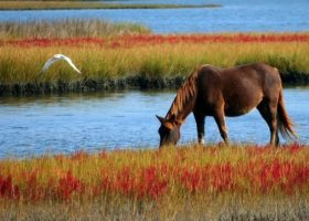 Paardenwinst en row (2) – omgaan met commissie